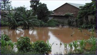 Photo along banks of Nzoia River
