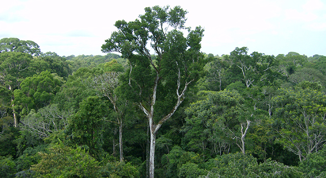 NASA photo of Amazon treetops