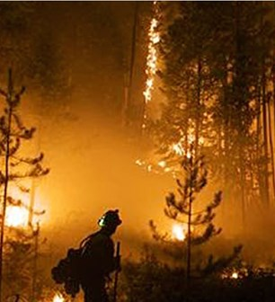 Forest Fire Detection & Monitoring System