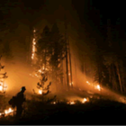 Forest Fire Detection And Monitoring System